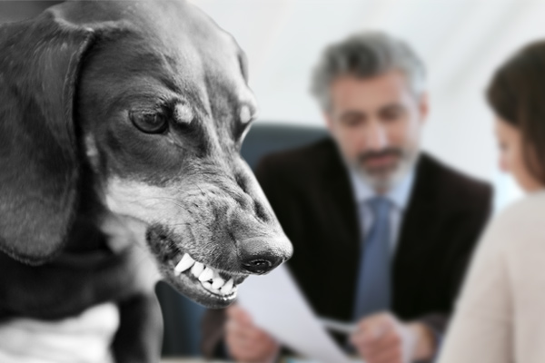 How Much Compensation Can You Expect On Hiring Dog Bite Lawyer?